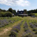 lawendowe pole - pejzaże